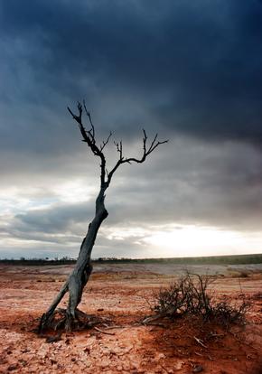 Dead Tree Desert